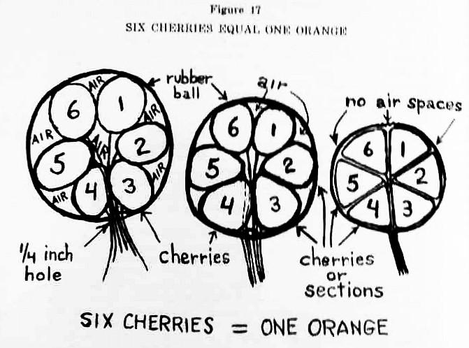 Evolution of Botany